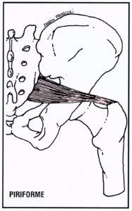 Piriforme
