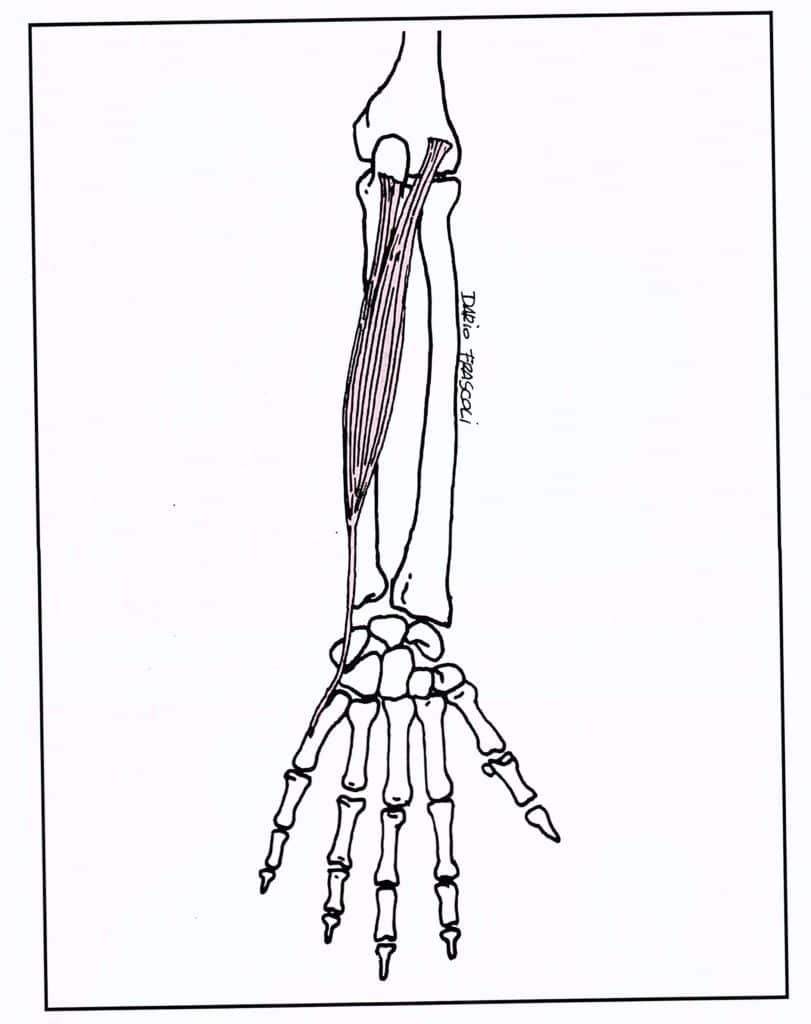 Estensori braccio