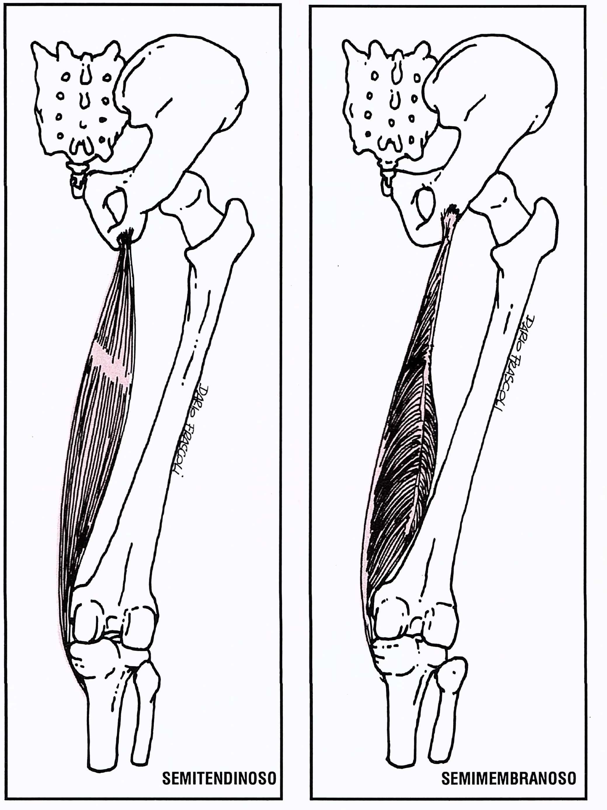 Rinforzo sblocco ischiocrurali2