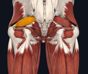 immagine del piriforme